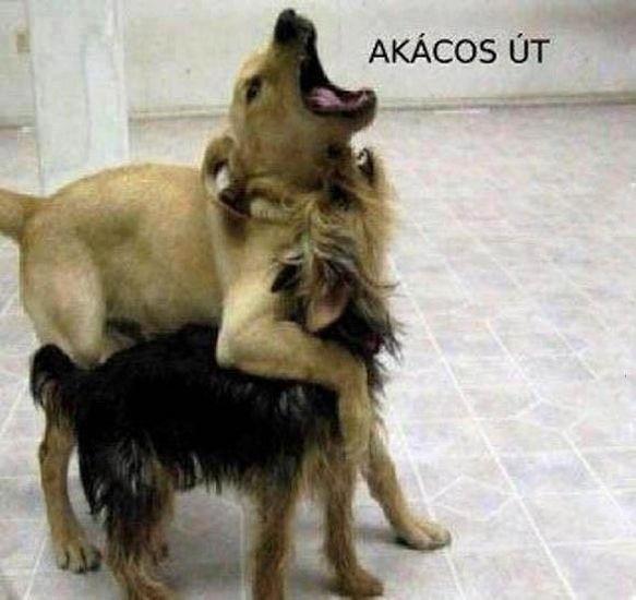 akacosut